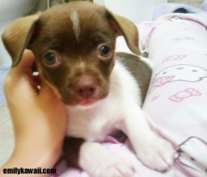 Dulce when she was a baby aww kawaii