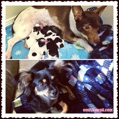 Dule and her puppies and Kikko